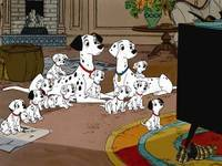 Dalmations_dogs